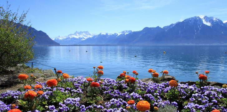 Colorful springtime flowers at Geneva lake, Montreux, Switzerland