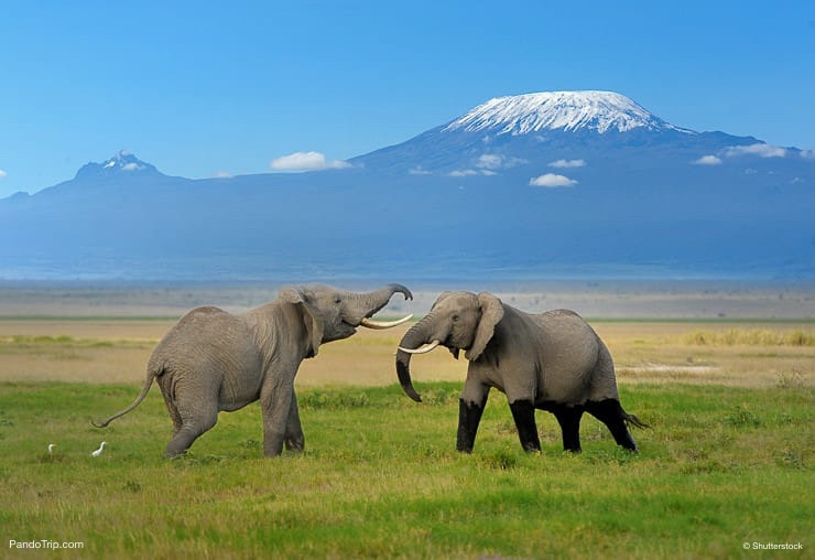 Elephants with Mount Kilimanjaro in the background. Kilimanjaro National Park, Tanzania