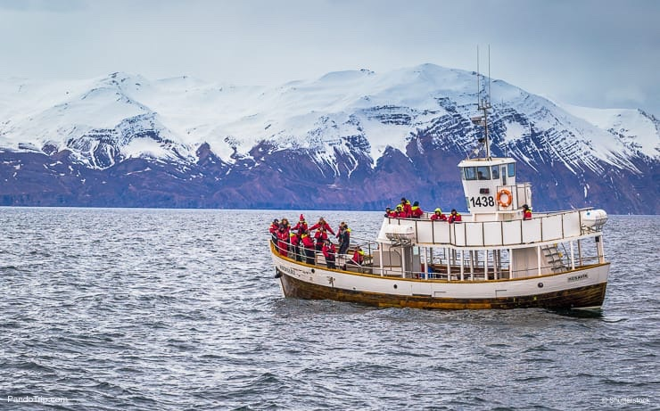 Tour boat in a whale-watching tour in Husavik, Iceland