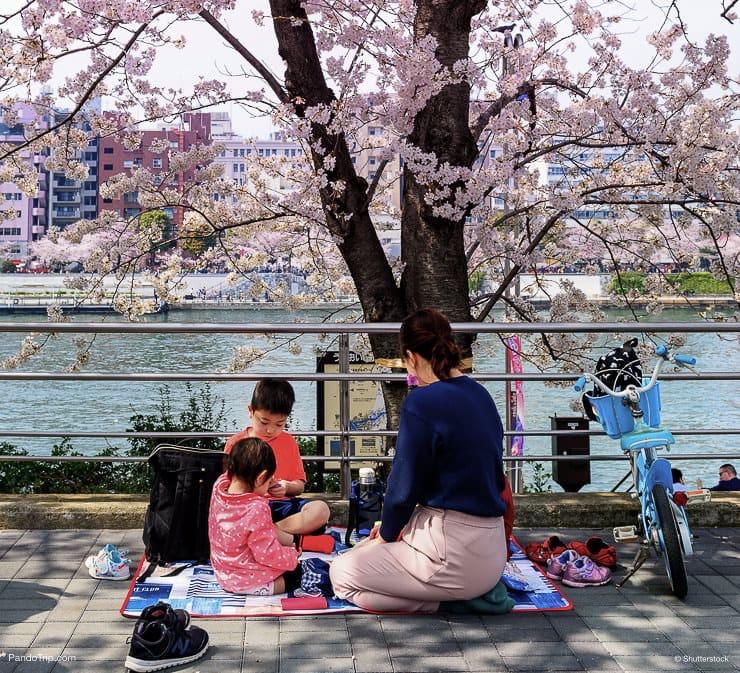 People having a picnic at Sumida Park