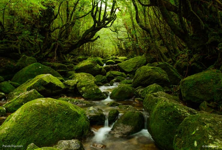 Yakushima Island, UNESCO World Heritage Site in Japan