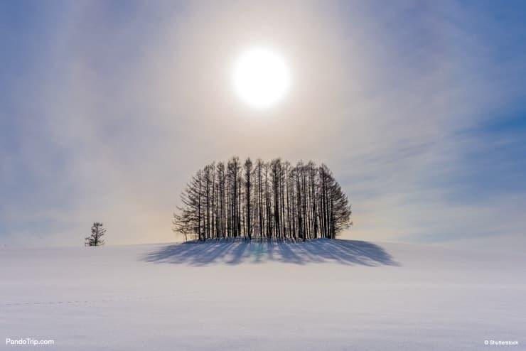 Japan countryside landscape in winter. Biei, Hokkaido