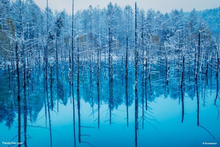 The Blue Pond, Biei, Hokkaido, Japan
