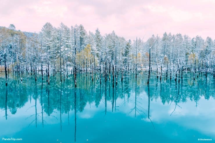 The Blue Pond in winter. Biei, Hokkaido, Japan