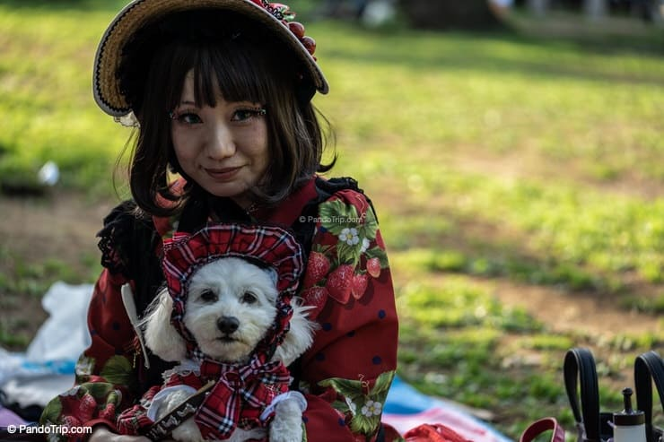 Girl with a dog in Yoyogi Park, Tokyo