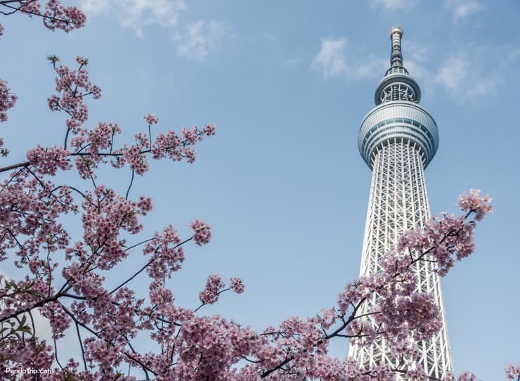 Tokyo Skytree is one of the most famous landmarks in Tokyo